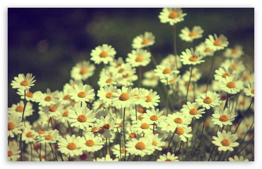 vintage_daisies_photography-t2